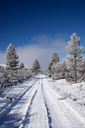 beautiful;calm;calmness;Cambrian;Cambrians;Central-Otago;clean;clear;cold;Coldness;Color;Colour;conifer;conifers;countryside;Daytime;Exterior;extreme-weather;freeze;freezing;freezing-fog;frost;Frosted;frosts;frosty;high-country;hoar-frost;hoar-frosts;Hoarfrost;hoarfrosts;ice;ice-crystals;icy;idyllic;Landscape;Landscapes;Maniototo;N.Z.;natural;Nature;new-zealand;NZ;Otago;Outdoor;Outdoors;Outside;peaceful;Peacefulness;phenomena;phenomenon;pine-tree;pine-trees;pure;Quiet;Quietness;rime;rime-ice;road;roads;rural;S.I.;Saint-Bathans;Scenic;Scenics;Season;Seasons;SI;silence;South-Is.;South-Island;spectacular;St-Bathans;St.-Bathans;stunning;track;tracks;tranquil;tranquility;view;water;weather;White;winter;Wintertime;wintery;wintry