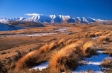 cold;country;countryside;freeze;freezing;grassland;grasslands;high;highcountry;mountain;mountains;snow;tussock;tussocks;winter