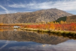 autuminal;autumn;autumn-colour;autumn-colours;autumnal;calm;Carrick-Range;Central-Otago;color;colors;colour;colours;Cromwell;dam;dams;deciduous;fall;gold;golden;irrigation-dam;irrigation-dams;irrigation-pond;irrigation-ponds;leaf;leaves;Mount-Difficulty;Mt-Difficulty;Mt.-Difficulty;N.Z.;New-Zealand;NZ;orchard;orchards;Otago;placid;pond-ponds;quiet;reflection;reflections;Ripponvale;S.I.;season;seasonal;seasons;serene;SI;smooth;South-Is;South-Island;still;tranquil;tree;trees;water;yellow