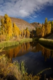 autuminal;autumn;autumn-colour;autumn-colours;autumnal;Bannockburn;briar-bush;briar-bushes;briars;calm;Central-Otago;color;colors;colour;colours;Cromwell;deciduous;fall;gold;golden;leaf;leaves;N.Z.;New-Zealand;NZ;Otago;placid;pond;ponds;poplar;poplar-tree;poplar-trees;poplars;quiet;reeds;reflection;reflections;rosehip;rosehips;S.I.;season;seasonal;seasons;serene;SI;smooth;South-Is;South-Island;Sth-Is;still;tranquil;tree;trees;water;yellow