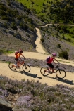 bicycle;bicycles;bike;bike-track;bike-tracks;bike-trail;bike-trails;bikes;Central-Otago;child;children;cycle;cycle-track;cycle-tracks;cycle-trail;cycle-trails;cycler;cyclers;cycles;cyclist;cyclists;families;family;hairpin-bend;hairpin-bends;hairpin-corner;hairpin-corners;mountain-bike;mountain-biker;mountain-bikers;mountain-bikes;mtn-bike;mtn-biker;mtn-bikers;mtn-bikes;N.Z.;New-Zealand;NZ;Otago;people;person;push-bike;push-bikes;push_bike;push_bikes;pushbike;pushbikes;Roxburgh;Roxburgh-Cycle-Track;Roxburgh-Cycle-Trail;Roxburgh-Gorge;Roxburgh-Gorge-Cycle-and-Walking-Trail;Roxburgh-Gorge-Cycle-Track;Roxburgh-Gorge-Cycle-Trail;Roxburgh-Gorge-Track;Roxburgh-Gorge-Trail;Roxburgh-Gorge-Walking-and-Cycle-Trail;S.I.;season;seasonal;seasons;SI;South-Is;South-Island;spring;spring-time;steep;Sth-is;switchback;switchback-road;switchback-roads;switchbacks;thyme;thyme-in-flower;tourism;tourist;tourists;violet;wild-thyme;zig-zag;zig-zag-road;zig-zag-roads;zig-zags;zig_zag;zig_zag-road;zig_zag-roads;zig_zags;zigzag;zigzag-road;zigzag-roads;zigzags