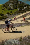 bicycle;bicycles;bike;bike-track;bike-tracks;bike-trail;bike-trails;bikes;Central-Otago;cycle;cycle-track;cycle-tracks;cycle-trail;cycle-trails;cycler;cyclers;cycles;cyclist;cyclists;families;family;hairpin-bend;hairpin-bends;hairpin-corner;hairpin-corners;lake;Lake-Roxburgh;lakes;mountain-bike;mountain-biker;mountain-bikers;mountain-bikes;mtn-bike;mtn-biker;mtn-bikers;mtn-bikes;N.Z.;New-Zealand;NZ;Otago;people;person;push-bike;push-bikes;push_bike;push_bikes;pushbike;pushbikes;Roxburgh;Roxburgh-Cycle-Track;Roxburgh-Cycle-Trail;Roxburgh-Gorge;Roxburgh-Gorge-Cycle-and-Walking-Trail;Roxburgh-Gorge-Cycle-Track;Roxburgh-Gorge-Cycle-Trail;Roxburgh-Gorge-Track;Roxburgh-Gorge-Trail;Roxburgh-Gorge-Walking-and-Cycle-Trail;S.I.;season;seasonal;seasons;SI;South-Is;South-Island;spring;spring-time;steep;Sth-is;switchback;switchback-road;switchback-roads;switchbacks;thyme;thyme-in-flower;tourism;tourist;tourists;violet;wild-thyme;zig-zag;zig-zag-road;zig-zag-roads;zig-zags;zig_zag;zig_zag-road;zig_zag-roads;zig_zags;zigzag;zigzag-road;zigzag-roads;zigzags
