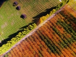 aerial;Aerial-drone;Aerial-drones;aerial-image;aerial-images;aerial-photo;aerial-photograph;aerial-photographs;aerial-photography;aerial-photos;aerial-view;aerial-views;aerials;autuminal;autumn;autumn-colour;autumn-colours;autumnal;Bannockburn;Central-Otago;color;colors;colour;colours;country;countryside;Cromwell;crop;crops;deciduous;Drone;Drones;emotely-operated-aircraft;fall;farm;farming;farmland;farms;field;fruit;fruit-tree;fruit-trees;gold;golden;horticulture;leaf;leaves;N.Z.;New-Zealand;NZ;orange;orchard;orchards;Otago;poplar;poplar-tree;poplar-trees;poplars;Quadcopter;Quadcopters;remote-piloted-aircraft-systems;remotely-piloted-aircraft;remotely-piloted-aircrafts;ROA;row;rows;RPA;RPAS;rural;S.I.;season;seasonal;seasons;SI;South-Is;South-Island;Sth-Is;tree;trees;U.A.V.;UA;UAS;UAV;UAVs;Unmanned-aerial-vehicle;unmanned-aircraft;unpiloted-aerial-vehicle;unpiloted-aerial-vehicles;unpiloted-air-system;yellow