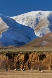 agricultural;agriculture;alp;alpine;alps;altitude;animal;animals;Central-Otago;cold;Coldness;country;countryside;domestic-stock;erode;eroded;erosion;ewes;extreme-weather;farm;farm-animals;farming;farmland;farms;field;fields;flock;flocks;freeze;freezing;herbivore;herbivores;herbivorous;herd;herds;high-altitude;Kakanui-Mountains;Kye-Burn;Kyeburn;livestock;mammal;mammals;Maniototo;meadow;meadows;mount;mountain;mountain-peak;mountainous;mountains;mountainside;mt;n.z.;New-Zealand;nz;Otago;outdoor;outdoors;outside;paddock;paddocks;pasture;pastures;peak;peaks;Ranfurly;range;ranges;rural;S.I.;Scenic;Scenics;Season;Seasons;sheep;SI;snow;snow-capped;snow_capped;snowcapped;snowy;South-Is;South-Is.;South-Island;Sth-Is;stock;weather;White;winter;Wintertime;wintery;wintry