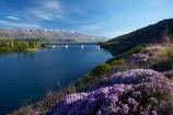 bridge;bridges;Central-Otago;Cromwell;Cromwell-Bridge;Deadmans-Point-Bridge;Deadmans-Point-Bridge;flower;flowers;infrastructure;lake;Lake-Dunstan;lakes;lilac;mauve;N.Z.;New-Zealand;NZ;Otago;Pisa-Range;purple;road-bridge;road-bridges;S.I.;season;seasonal;seasons;SI;South-Is;South-Island;spring;spring-color;spring-colour;spring_time;springtime;Sth-Is;thyme;traffic-bridge;traffic-bridges;transport;violet;Wild-thyme