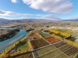 aerial;Aerial-drone;Aerial-drones;aerial-image;aerial-images;aerial-photo;aerial-photograph;aerial-photographs;aerial-photography;aerial-photos;aerial-view;aerial-views;aerials;autuminal;autumn;autumn-colour;autumn-colours;autumnal;Bannockburn;Central-Otago;color;colors;colour;colourful;colours;country;countryside;Cromwell;crop;crops;deciduous;Drone;Drones;fall;farm;farming;farmland;farms;field;fruit;fruit-tree;fruit-trees;gold;golden;horticulture;Kawarau-Arm;lake;Lake-Dunstan;lakes;leaf;leaves;N.Z.;New-Zealand;NZ;orange;orchard;orchards;Otago;pattern;patterns;poplar;poplar-tree;poplar-trees;poplars;Quadcopter;Quadcopters;row;rows;rural;S.I.;season;seasonal;seasons;shape;shapes;SI;South-Is.;South-Island;Sth-Is;Sth-Is.;tree;trees;U.A.V.;UAV;UAVs;Unmanned-aerial-vehicle;water;yellow