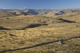 4wd-track;4wd-tracks;back-country;backcountry;Carrick-Range;Carrick-Town-Track;Carrick-Track;Carricktown-Track;Central-Otago;countryside;dirt-track;dusty;four-wheel-drive-track;four-wheel-drive-tracks;gravel-road;gravel-roads;high-altitude;high-country;highcountry;highlands;metal-road;metal-roads;metalled-road;metalled-roads;N.Z.;New-Zealand;NZ;Otago;remote;remoteness;road;roads;rural;S.I.;SI;South-Island;track;tracks;tussock;tussock-grass;tussocks;uplands