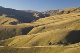 4wd-track;4wd-tracks;back-country;backcountry;Carrick-Range;Central-Otago;countryside;dirt-track;dusty;four-wheel-drive-track;four-wheel-drive-tracks;gravel-road;gravel-roads;high-altitude;high-country;highcountry;highlands;metal-road;metal-roads;metalled-road;metalled-roads;N.Z.;Nevis-Road;Nevis-Valley;New-Zealand;NZ;Otago;remote;remoteness;road;roads;rural;S.I.;SI;South-Island;track;tracks;tussock;tussock-grass;tussocks;uplands