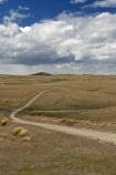 4wd-track;4wd-tracks;back-country;backcountry;Central-Otago;countryside;dirt-track;Dunstan-Track;Dunstan-Trail;dusty;four-wheel-drive-track;four-wheel-drive-tracks;goldfields;Goldrush;gravel-road;gravel-roads;Great-Moss-Swamp;high-altitude;high-country;highcountry;highlands;historic;historic-road;historic-route;historical;metal-road;metal-roads;metalled-road;metalled-roads;N.Z.;New-Zealand;NZ;Old-Dunstan-Trail;Otago;remote;remoteness;road;roads;rural;S.I.;SI;South-Island;track;tracks;tussock;tussock-grass;tussocks;uplands