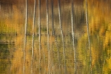 autuminal;autumn;autumn-colour;autumn-colours;autumnal;Bannockburn;Bannockburn-Inlet;calm;Central-Otago;color;colors;colour;colours;deciduous;fall;golden;lake;Lake-Dunstan;lakes;leaf;leaves;N.Z.;New-Zealand;NZ;Otago;placid;quiet;reflection;reflections;ripple;ripples;S.I.;season;seasonal;seasons;serene;SI;smooth;South-Island;still;tranquil;tree;trees;trunk;trunks;water;yellow
