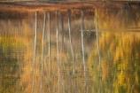 autuminal;autumn;autumn-colour;autumn-colours;autumnal;Bannockburn;Bannockburn-Inlet;bird;birds;calm;Central-Otago;color;colors;colour;colours;deciduous;duck;ducks;fall;golden;lake;Lake-Dunstan;lakes;leaf;leaves;N.Z.;New-Zealand;NZ;Otago;placid;quiet;reflection;reflections;ripple;ripples;S.I.;season;seasonal;seasons;serene;SI;smooth;South-Island;still;tranquil;tree;trees;trunk;trunks;water;yellow