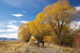 adventure;autuminal;autumn;autumn-colour;autumn-colours;autumnal;avenue;avenues;bicycle;bicycles;bike;biker;bikes;Central-Otago;Central-Otago-Rail-Trail;color;colors;colour;colours;cycle;cycle-track;cycler;cyclers;cycles;cycling-track;cyclist;cyclists;deciduous;fall;golden;Ida-Valley;leaf;leaves;Maniototo;mountain-bike;mountain-bike-track;mountain-biker;mountain-bikers;mountain-bikes;mtn-bike;mtn-biker;mtn-bikers;mtn-bikes;N.Z.;New-Zealand;NZ;Otago;Otago-Central-Rail-Trail;Oturehua;push-bike;push-bikes;push_bike;push_bikes;pushbike;pushbikes;rail-trail;rail-trails;S.I.;scenic;season;seasonal;seasons;SI;South-Island;sports;tourism;track;tracks;tree;trees;willow;willow-tree;willow-trees;willows;yellow