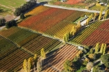 aerial;aerial-photo;aerial-photograph;aerial-photographs;aerial-photography;aerial-photos;aerial-view;aerial-views;aerials;Central-Otago;color;colors;colour;country;countryside;Cromwell;crop;crops;farm;farming;farmland;farms;field;fruit;fruit-tree;fruit-trees;horticulture;Jackson-Orchard;Jacksons-Orchard;Jacksons-Orchard;N.Z.;New-Zealand;NZ;orange;orchard;orchards;Otago;poplar;poplar-tree;poplar-trees;poplars;row;rows;rural;S.I.;SI;South-Is.;South-Island;tree;trees