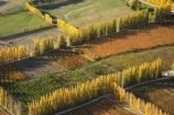 aerial;aerial-photo;aerial-photograph;aerial-photographs;aerial-photography;aerial-photos;aerial-view;aerial-views;aerials;agricultural;agriculture;Alexandra;autuminal;autumn;autumn-colour;autumn-colours;autumnal;Central-Otago;color;colors;colour;colours;country;countryside;crop;crops;deciduous;Earnscleugh;fall;farm;farming;farmland;farms;field;fields;fruit;fruit-tree;fruit-trees;horticulture;meadow;meadows;N.Z.;New-Zealand;NZ;orange;orchard;orchards;Otago;paddock;paddocks;pasture;pastures;pattern;patterns;poplar;poplar-tree;Poplar-Trees;poplars;row;rows;rural;S.I.;season;seasonal;seasons;shape;shapes;SI;South-Is.;South-Island;tree;trees