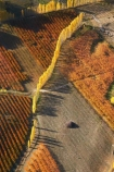 aerial;aerial-photo;aerial-photograph;aerial-photographs;aerial-photography;aerial-photos;aerial-view;aerial-views;aerials;Alexandra;autuminal;autumn;autumn-colour;autumn-colours;autumnal;Central-Otago;color;colors;colour;colours;country;countryside;crop;crops;deciduous;Earnscleugh;fall;farm;farming;farmland;farms;field;fruit;fruit-tree;fruit-trees;horticulture;N.Z.;New-Zealand;NZ;orange;orchard;orchards;Otago;pattern;patterns;poplar;poplar-tree;poplar-trees;poplars;row;rows;rural;S.I.;season;seasonal;seasons;shape;shapes;SI;South-Is.;South-Island;tree;trees;yellow