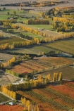 aerial;aerial-photo;aerial-photograph;aerial-photographs;aerial-photography;aerial-photos;aerial-view;aerial-views;aerials;agricultural;agriculture;Alexandra;autuminal;autumn;autumn-colour;autumn-colours;autumnal;Central-Otago;color;colors;colour;colours;country;countryside;crop;crops;deciduous;Earnscleugh;fall;farm;farming;farmland;farms;field;fields;fruit;fruit-tree;fruit-trees;horticulture;meadow;meadows;N.Z.;New-Zealand;NZ;orchard;orchards;Otago;paddock;paddocks;pasture;pastures;poplar;poplar-tree;poplar-trees;poplars;row;rows;rural;S.I.;season;seasonal;seasons;SI;South-Is.;South-Island;tree;trees