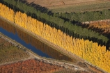 aerial;aerial-photo;aerial-photograph;aerial-photographs;aerial-photography;aerial-photos;aerial-view;aerial-views;aerials;autuminal;autumn;autumn-colour;autumn-colours;autumnal;Central-Otago;color;colors;colour;colours;country;countryside;Cromwell;crop;crops;deciduous;fall;farm;farming;farmland;farms;field;fruit;fruit-tree;fruit-trees;horticulture;irrigation-pond;irrigation-ponds;N.Z.;New-Zealand;NZ;orange;Orchard;orchards;Otago;pattern;patterns;pond;ponds;poplar;poplar-tree;Poplar-Trees;poplars;Ripponvale;row;rows;rural;S.I.;season;seasonal;seasons;shape;shapes;SI;South-Is.;South-Island;tree;trees