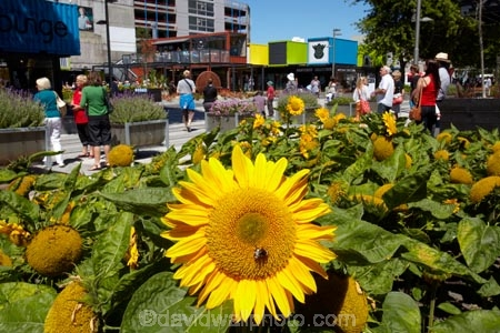 arcade;arcades;boutique;boutiques;Canterbury;Cashel-Mall;Cashel-St-Mall;Cashel-Street;Cashel-Street-Mall;Christchurch;commerce;commercial;container;container-mall;containers;flower;flower-garden;flower-gardens;flowers;Helianthus-annuus;mall;malls;N.Z.;New-Zealand;NZ;people;person;plaza;plazas;pop-up-mall;pop_up-mall;Re:START-container-mall;Re:START-mall;restart-mall;retail;retail-store;retailer;retailers;S.I.;shipping-container;shipping-containers;shop;shoppers;shopping;shopping-arcade;shopping-arcades;shopping-center;shopping-centers;shopping-centre;shopping-centres;shopping-mall;shopping-malls;shops;SI;South-Is;South-Island;steet-scene;store;stores;street-scenes;sun-flower;sun-flowers;sunflower;sunflowers;yellow