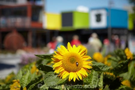 arcade;arcades;boutique;boutiques;Canterbury;Cashel-Mall;Cashel-St-Mall;Cashel-Street-Mall;Christchurch;commerce;commercial;container;container-mall;containers;flower;flower-garden;flower-gardens;flowers;Helianthus-annuus;mall;malls;N.Z.;New-Zealand;NZ;people;person;plaza;plazas;pop-up-mall;pop_up-mall;Re:START-container-mall;Re:START-mall;restart-mall;retail;retail-store;retailer;retailers;S.I.;shipping-container;shipping-containers;shop;shoppers;shopping;shopping-arcade;shopping-arcades;shopping-center;shopping-centers;shopping-centre;shopping-centres;shopping-mall;shopping-malls;shops;South-Is;South-Island;steet-scene;store;stores;street-scenes;sun-flower;sun-flowers;sunflower;sunflowers;yellow