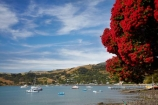 Akaroa;Akaroa-Harbor;Akaroa-Harbour;Banks-Peninsula;Canterbury;dock;docks;flower;flowers;jetties;jetty;metrosideros-excelsa;N.Z.;native;native-plant;native-plants;New-Zealand;NZ;pier;piers;plant;plants;pohutakawa;pohutakawas;pohutukawa;pohutukawa-flower;pohutukawa-flowers;pohutukawa-tree;pohutukawa-trees;pohutukawas;quay;quays;S.I.;South-Is;South-Island;summer;tree;trees;waterside;wharf;wharfes;wharves