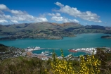 Banks-Peninsula;broom-plant;Canterbury;Chch;Christchurch;gondola-top-station;harbor;harbors;harbour;harbours;invasive-species;Lyttelton-Harbor;Lyttelton-Harbour;Lyttelton-Port;Mount-Cavendish;Mount-Cavendish-Gondola;Mt-Cavendish;Mt-Cavendish-Gondola;N.Z.;New-Zealand;noxious-weed;NZ;pest;Port-Hills;Port-of-Lyttelton;S.I.;SI;South-Is;South-Island;Sth-Is;top-station;yellow-flower;yellow-flowers