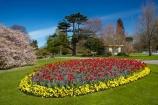 bloom;blooming;blooms;blooning;blossom;blossom-tree;blossom-trees;blossoms;Botanic-Garden;Botanic-Gardens;Botanical-Garden;Botanical-Gardens;Canterbury;Christchurch;Christchurch-Botanic-Gardens;Christchurch-Botanical-Gardens;Christchurch-Gardens;floral;flower;flower-bed;flower-beds;flower-garden;flower-gardens;flowers;garden;gardens;Hagley-Park;N.Z.;New-Zealand;NZ;public-flower-garden;public-garden;public-gardens;S.I.;SI;South-Is;South-Island;spring;spring-time;spring_time;springtime;Sth-Is;tulip;Tulipa;tulips;yellow;yellow-flowers