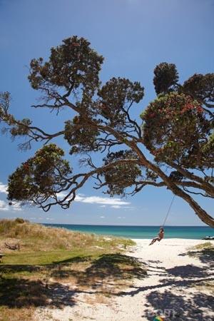 beach;beaches;child;children;coast;coastal;Coromandel;Coromandel-Peninsula;fun;happy;joy;kid;kids;kiwi-icon;kiwi-icons;kiwiana;N.I.;N.Z.;New-Zealand;NI;North-Is;North-Is.;North-Island;NZ;outdoor;outside;people;person;play;playing;Pohutukawa-Tree;Pohutukawa-Trees;rope-swing;rope-swings;shore;summer;swing;swinging;swings;Waikato;Whangapoua;Whangapoua-Beach
