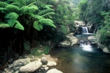 brook;calm;calmness;fern;forest;green;native-bush;natural;nature;stream;water;waterfalls