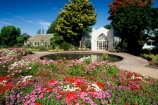 botanical;color;colorful;colour;colourful;flower;flowers;garden;gardens;hamilton;hamilton-gardens;pink;pond;red