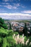 fern;ponga;toetoe;town;tree-fern