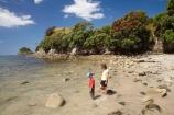 beach;beaches;boy;boys;child;children;coast;coastal;coastline;coastlines;coasts;Coromandel;Coromandel-Peninsula;crimson;families;family;flower;flowers;foreshore;Hahei;Hahei-Beach;kid;kids;little-boy;little-boys;metrosideros-excelsa;N.I.;N.Z.;New-Zealand;NI;North-Is;North-Is.;North-Island;NZ;ocean;people;person;plant;plants;pohutakawa;pohutakawas;pohutukawa;pohutukawa-flower;pohutukawa-flowers;pohutukawa-tree;pohutukawa-trees;pohutukawas;red;red-flowers;sand;sandy;sea;seas;shore;shoreline;shorelines;shores;tree;trees;Waikato;water