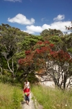 boy;Coromandel;Coromandel-Peninsula;crimson;flower;flowers;Hahei;Hahei-Beach;metrosideros-excelsa;N.I.;N.Z.;New-Zealand;NI;North-Is;North-Is.;North-Island;NZ;people;person;plant;plants;pohutakawa;pohutakawas;pohutukawa;pohutukawa-flower;pohutukawa-flowers;pohutukawa-tree;pohutukawa-trees;pohutukawas;red;red-flowers;steep;track;tracks;tree;trees;Waikato;walking