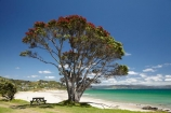 beach;beaches;coast;coastal;coastline;Coromandel;Coromandel-Peninsula;flower;flowers;Kuaotunu;Kuaotunu-Beach;metrosideros-excelsa;N.I.;N.Z.;New-Zealand;NI;North-Is;North-Is.;North-Island;NZ;ocean;oceans;picnic-table;picnic-tables;plant;plants;pohutakawa;pohutakawas;pohutukawa;pohutukawa-flower;pohutukawa-flowers;pohutukawa-tree;pohutukawa-trees;pohutukawas;sand;sandy;sea;seas;shore;shoreline;summer;tree;trees;Waikato