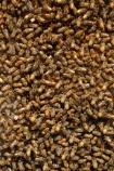 309-Rd;309-Road;bee;beehive;beehives;bees;Coromandel;Coromandel-Peninsula;crowd;hive;hives;honey-production;lots;many;N.I.;N.Z.;New-Zealand;NI;North-Is;North-Is.;North-Island;NZ;swarm;swarms;Waiau;Waikato