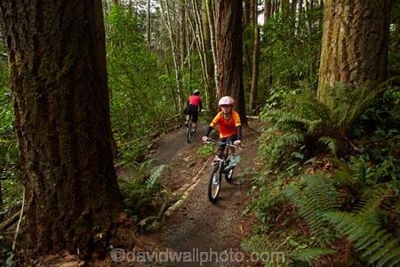 bicycle;bicycles;bike;bike-track;bike-tracks;bike-trail;bike-trails;bikes;child;children;cycle;cycle-track;cycle-tracks;cycle-trail;cycle-trails;cycler;cyclers;cycles;cycleway;cycleways;cyclist;cyclists;Dunedin;excercise;excercising;girl;girls;mountain-bike;mountain-biker;mountain-bikers;mountain-bikes;mtn-bike;mtn-biker;mtn-bikers;mtn-bikes;N.Z.;New-Zealand;NZ;Otago;people;person;push-bike;push-bikes;push_bike;push_bikes;pushbike;pushbikes;redwood-tree;redwood-trees;Redwoods-mountain-bike-track;S.I.;SI;South-Is;South-Is.;South-Island;Sth-Is;tree-trunk;tree-trunks;Waikari-Creek;mountain;biking;cycling;