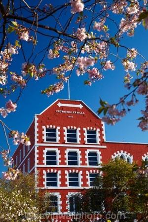 1867;1890;bloom;blooming;blooms;blossom;blossoms;building;buildings;Crown-Mills-Building;Crown-Roller-Mills;Dunedin;flower;flowers;heritage;historic;historic-building;historic-buildings;historical;historical-building;historical-buildings;history;N.Z.;New-Zealand;NZ;old;Otago;S.I.;season;seasonal;seasons;SI;South-Is;South-Island;spring;spring-time;spring_time;springtime;Sth-Is;tradition;traditional;window;windows