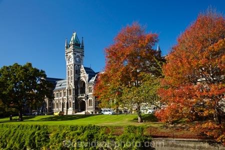 autuminal;autumn;autumn-colour;autumn-colours;autumnal;building;buildings;clock-tower;clock_tower;color;colors;colour;colours;deciduous;Dunedin;fall;heritage;historic;historic-building;historic-buildings;historical;historical-building;historical-buildings;history;leaf;leaves;N.Z.;New-Zealand;NZ;oak-leaf;oak-leaves;oak-tree;oak-trees;oaks;old;Otago;Otago-University;pin-oak;pin-oaks;registry-building;S.I.;season;seasonal;seasons;SI;South-Is;South-Is.;South-Island;Sth-Is;tradition;traditional;tree;trees;universities;university;University-of-Otago