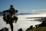 agricultural;agriculture;cabbage-tree;cabbage-trees;cloud;clouds;cloudy;Cordyline-australis;country;countryside;Dunedin;farm;farming;farmland;farms;field;fields;fog;foggy;fogs;meadow;meadows;mist;mists;misty;N.Z.;New-Zealand;NZ;Otago;Otago-Harbor;Otago-Harbour;Otago-Peninsula;paddock;paddocks;pasture;pastures;rural;S.I.;SI;South-Is.;South-Island