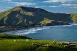 agricultural;agriculture;Allans-Beach;Allans-Beach;animal;animals;ater;coast;coastal;coastline;coastlines;coasts;country;countryside;Dunedin;farm;farming;farmland;farms;field;fields;mammal;mammals;meadow;meadows;Mount-Charles;Mt-Charles;N.Z.;New-Zealand;ocean;oceans;Otago;Otago-Peninsula;Pacific-Ocean;paddock;paddocks;pasture;pastures;rural;S.I.;Sandymount;sea;seas;shore;shoreline;shorelines;shores;SI;South-Is;South-Island;Sth-Is