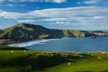 agricultural;agriculture;Allans-Beach;Allans-Beach;animal;animals;ater;coast;coastal;coastline;coastlines;coasts;country;countryside;Dunedin;farm;farming;farmland;farms;field;fields;mammal;mammals;meadow;meadows;Mount-Charles;Mt-Charles;N.Z.;New-Zealand;ocean;oceans;Otago;Otago-Peninsula;Pacific-Ocean;paddock;paddocks;pasture;pastures;rural;S.I.;Sandymount;sea;seas;shore;shoreline;shorelines;shores;SI;South-Is;South-Island;Sth-Is