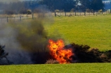 agricultural;agriculture;air-pollution;air-polutants;air-quality;airshed;airsheds;alight;atmosphere;bad-air-quality;bonfire;bonfires;burn;burn-off;burn-offs;burn_off;burn_offs;burned;burning;burning-off;burnoff;burnoffs;burns;burnt;bush-fire;bush-fires;carbon-emission;carbon-emissions;carbon-footprint;common-gorse;country;countryside;danger;dangerous;destruction;discharge;Dunedin;emission;emissions;emit;environment;environmental;farm;farming;farmland;farms;field;fields;fire;fires;flamable;flame;flames;flaming;furze;global-warming;gorse;greenhouse-gas;greenhouse-gases;heat;high-pollution-day;high-pollution-days;horticulture;hot;meadow;meadows;N.Z.;New-Zealand;noxious-plant;noxious-plants;noxious-weed;noxious-weeds;NZ;on-fire;orange;Otago;paddock;paddocks;pasture;pastures;pest;pests;pollute;polluting;pollution;poor-air-quality;rural;S.I.;SI;smog;smoggy;smoke;smokey;South-Is;South-Island;Sth-Is;Strath-Taieri;Ulex-europaeus;weed;weeds;whin;wild-fire;wild-fires;wildfire;wildfires