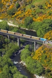 Bloom;bridge;bridges;carriage;carriages;common-gorse;country;countryside;Dunedin;excursion;furze;gorse;gorse-flower;gorse-flowers;Gorse-in-Flower;heritage;Hindon;historic-bridge;historic-bridges;historical-bridge;historical-bridges;invasive-plant-species;N.Z.;New-Zealand;noxious-plant;noxious-plants;noxious-weed;noxious-weeds;NZ;old;Otago;Passenger-Train;Passenger-Trains;rail;rail-bridge;rail-bridges;railroad;railroads;rails;railway;railway-bridge;railway-bridges;railways;river;rivers;rural;S.I.;season;seasonal;seasons;SI;South-Is;South-Is.;South-Island;spring;spring-time;spring_time;springtime;Sth-Is;Taieri;Taieri-Gorge;Taieri-Gorge-Excursion-Train;Taieri-Gorge-Train;Taieri-River;tourism;train;train-bridge;train-bridges;trains;transport;transportation;travel;Ulex-europaeus;weed;weeds;whin;willow-tree;willow-trees;willows;yellow;yellow-flower;yellow-flowers