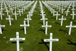 cross;crosses;Dunedin;Field-of-Rememberance;memorial;memorial-crosses;memorials;military-crosses;military-memorial;N.Z.;New-Zealand;NZ;Otago;pattern;patterns;Queens-Gardens;Queens-Gardens;row;rows;rows-of-crosses;soldiers-memorial-crosses;soldiers-memorials;South-Is;South-Island;Sth-Is;WWI-memorial