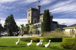 architecture;building;buildings;castle;castles;duck;ducks;Dunedin;fountain;fountains;geese;goose;grand;historic;historical;history;Larnach-Castle;larnachs-castle;larnachs-castle;manor;New-Zealand;old;otago-peninslar;Otago-Peninsula;South-Island