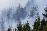 emergency;fire;fire-fighters;fire-fighting;fire_fighting;firefighting;fires;Forest-Fire;Forest-Fires;pine;pine-forest;pine-forests;pine-tree;pine-trees;pines;smoke;smokey