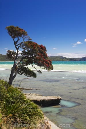 beach;beaches;coast;coastal;coastline;east-cape;east-coast;Eastland;new-zealand;north-is.;north-island;ocean;oceans;pohutukawa;pohutukawa-flower;pohutukawa-flowers;pohutukawa-tree;pohutukawa-trees;pohutukawas;sea;shore;shoreline;surf;Te-Araroa;tree;trees;wave;waves