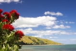 beach;beaches;coast;coastal;coastline;Eastland;Gisborne;new-zealand;north-is.;north-island;ocean;oceans;Pohutukawa-Flowers;sand;sandy;sea;shore;shoreline;Tatapouri