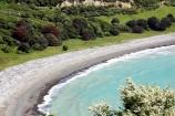 coast;coastal;coastline;east-coast;Eastland;Flower;flowers;leptospermum-scoparium;Manuka;manukas;Maraenui-Lookout;new-zealand;north-is.;north-island;ocean;oceans;sea;shore;shoreline;surf;tea-tree;tea-trees;tea_tree;tea_trees;teatree;teatrees;wave;waves;Whituare-Bay