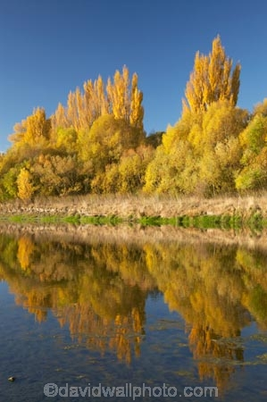 autuminal;autumn;autumn-colour;autumn-colours;autumnal;blue;calm;color;colors;colour;colours;deciduous;fall;Hawkes-Bay;leaf;leaves;N.I.;N.Z.;New-Zealand;NI;North-Island;NZ;placid;poplar;poplar-tree;poplar-trees;poplars;quiet;reflection;reflections;river;rivers;season;seasonal;seasons;serene;smooth;still;tranquil;tree;trees;water;willow;willow-tree;willow-trees;willows;yellow