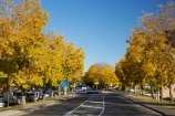 autuminal;autumn;autumn-colour;autumn-colours;autumnal;avenue;avenues;color;colors;colour;colours;deciduous;fall;Havelock-North;Hawkes-Bay;leaf;leaves;N.I.;N.Z.;New-Zealand;NI;North-Island;NZ;road;roads;season;seasonal;seasons;street;streets;tree;trees